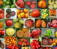 Irinas Tomaten öffnungszeiten
